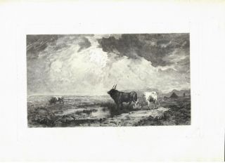 Bulls In the Roman Campagna. A. Mass&eacute